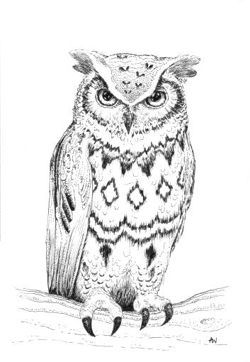 Owl 01